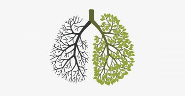 Simple ways to clean lungs in a few days. For smokers and non-smokers.